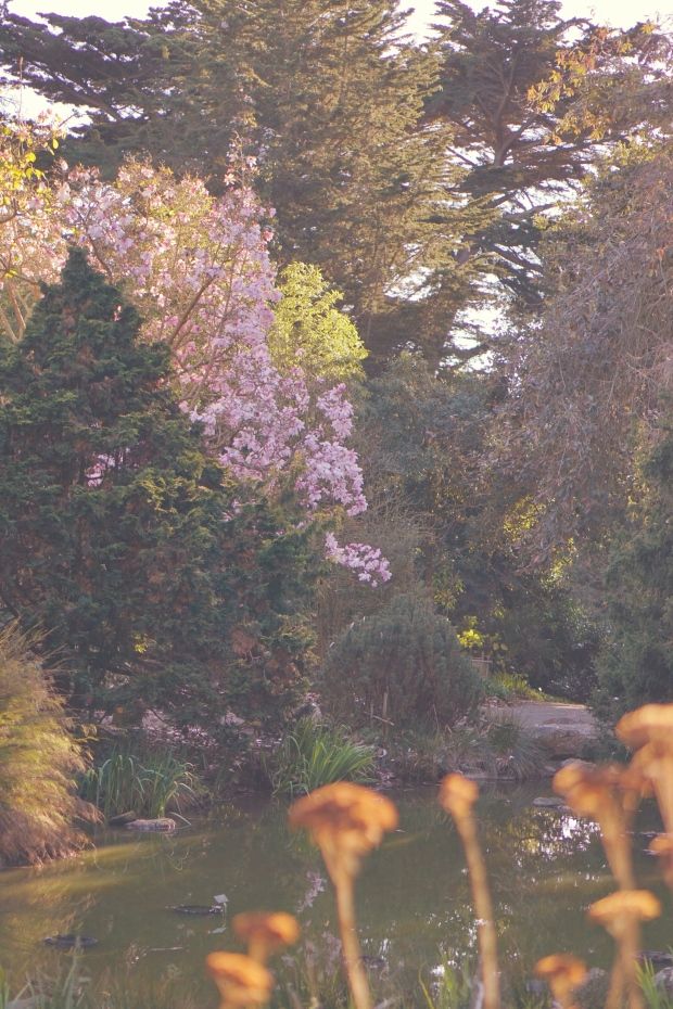 Emme Hope Slow Blog San Francisco Botanical Gardens Dwarf Conifer Pond
