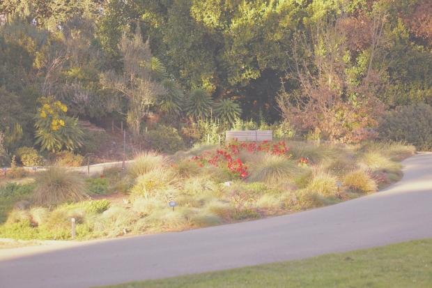 Emme Hope Slow Blog San Francisco Botanical Gardens Golden Hour Sunset Bench