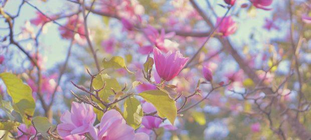 Emme Hope Slow Blog San Francisco Botanical Garden Magnolia Tree 1