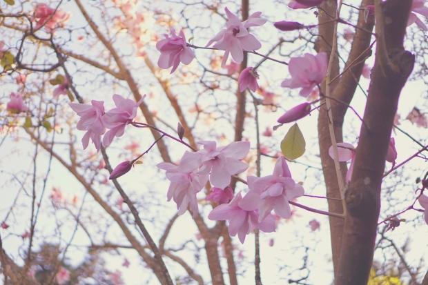 Emme Hope Slow Blog San Francisco Botanical Gardens Magnolia Tree 3
