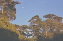 Emme Hope Slow Blog San Francisco Botanical Garden Redwood Trees Sunset Golden Hour