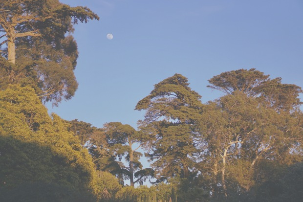 Emme Hope Slow Blog San Francisco Botanical Gardens Redwood Trees Sunset Golden Hour