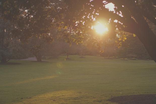Emme Hope Slow Blog San Francisco Botanical Gardens Sunset Golden Hour Great Meadow