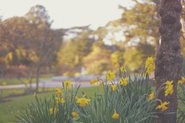 Emme Hope Slow Blog San Francisco Botanical Gardens Yellow Bush Flowers