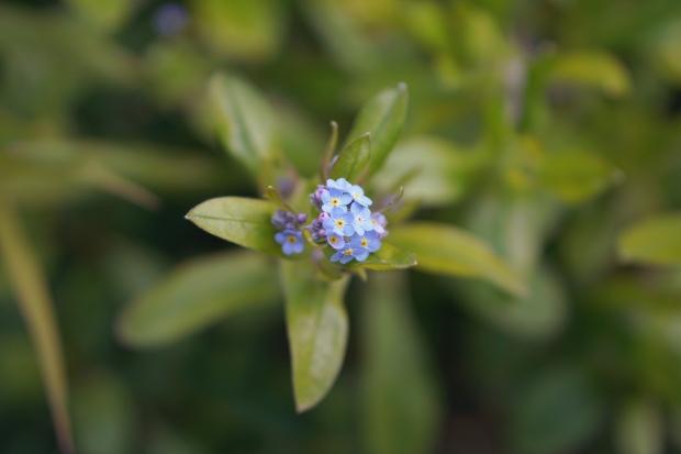 Emme Hope Slow Blog San Francisco Tiny Flowers 1
