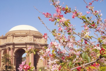 Palace of Fine Arts San Francisco Cherry Blossoms Emme Hope Slow Blog - COPYRIGHT 2018